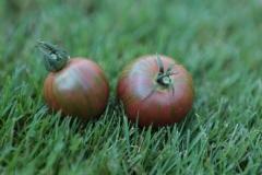 Tomato Twinsies
