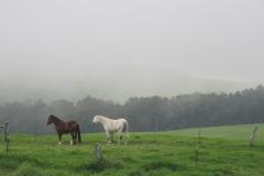 Hawaiian Horse Farm